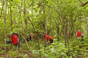 Citoyens qui ramassent des déchets dans une forêt