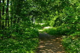 Photo of a wooded