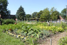 Photo d'un jardin communautaire